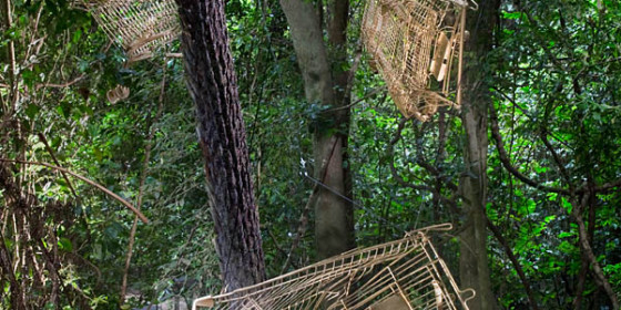 2017 Call for Artists for Prestigious Rainforest Art Prize